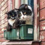 Easy Outdoor Housing For Cats: What You Should Know