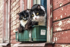 Easy Outdoor Housing For Cats
